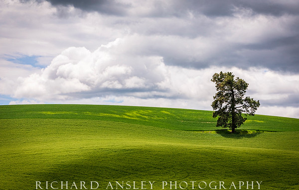 Watching Over-Palouse, Washington