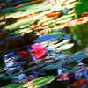 Abstract Water Lilies #1
