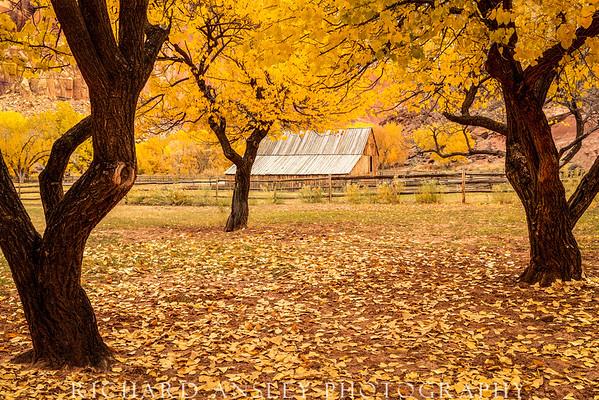 Golden Barn-Capitol Reef NP, Utah