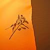 Dune Dancer-Coral Pink Sand Dunes, Utah
