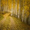 Aspen Two-Track (landscape)-Kolob Plateau, Utah