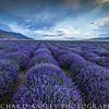 Lavender Field 2-Mona, Utah