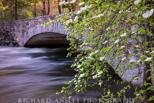 Dogwood Bridge-Yosemite NP, CA