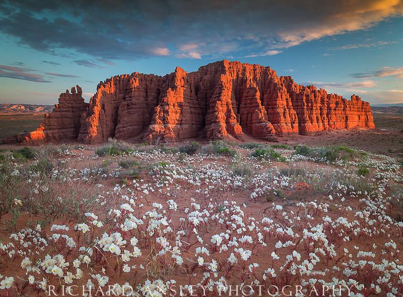 Blooming Desert & Gothic Butte -San Rafael Swell, Utah
