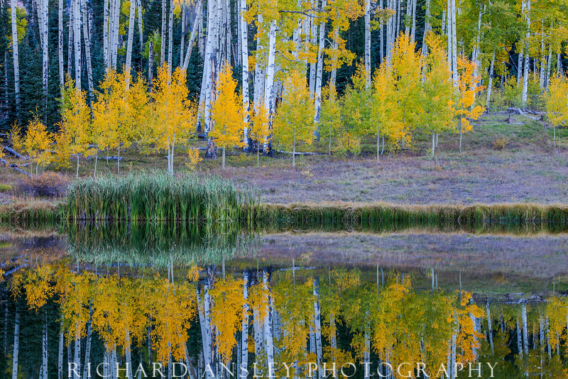 Aspen Reflections 1-Cimarron Mountains, Colorado