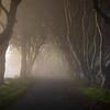 Dark Hedges Ghost-Ireland