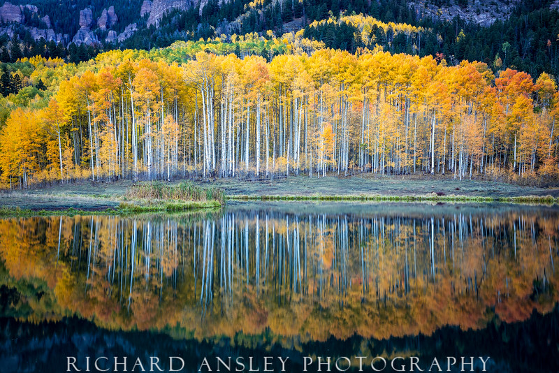 Aspen Pond Reflections-San Juan mountains