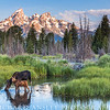 Teton Moose-Teton National Park, Wyomng