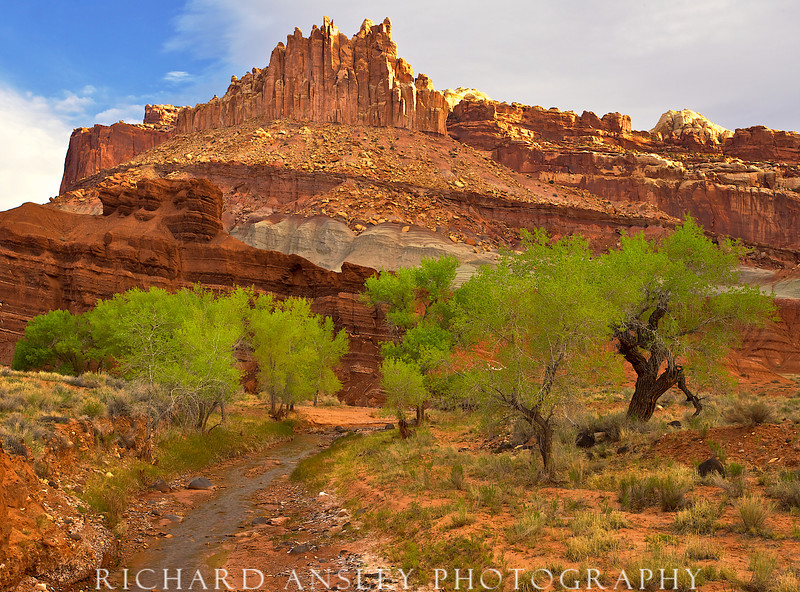 Spring Morning-Capitol Reef National Park, Utah