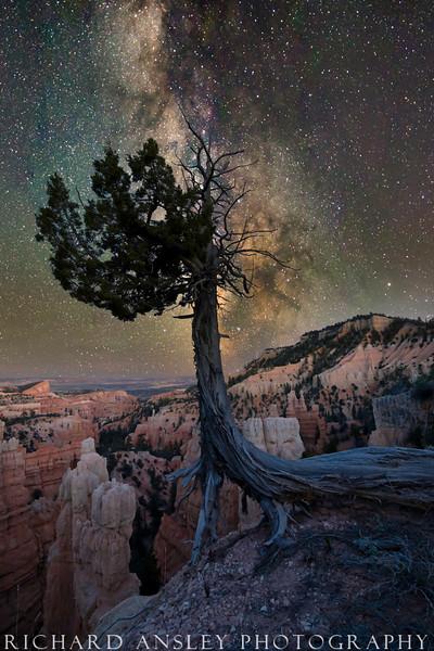 Bryce Rim Tree & Night Sky-Bryce Canyon National Park, Utah