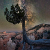 Bryce Rim Tree & Night Sky-Bryce Canyon National Park, Utah
