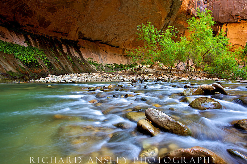 Shimmering Waters-Virgin River, Zion NP, Utah