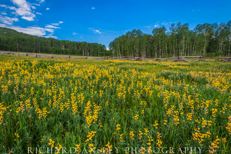 Browns Hole Meadow-Fishlake National Forest, Utah