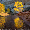 Gold On Pleasant Creek 2-Capitol Reef NP, Utah