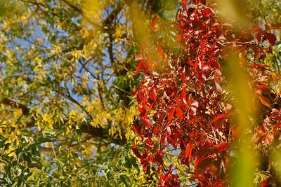 Fall Colors & Nature