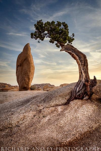 Stone and Tree Sunset-Joshua Tree NP-California