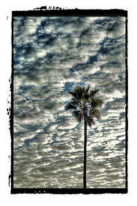 So Cal Palm. Border.