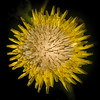Yellow Weed Flower