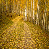 Autumn Road (vertical) -Kolob Plateau, Utah