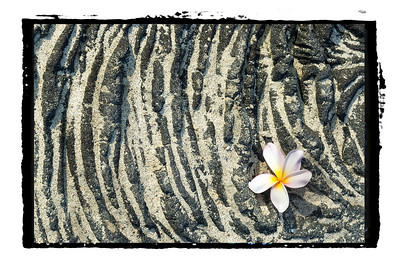 Plumeria on Lava Rock. Borders.