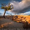 Sole Survivor-Bryce Canyon, Utah