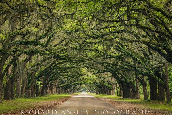 Tunnel Of Oaks-Wormsloe Plantation, GA