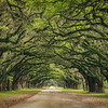 Tunnel Of Oaks-Wormsloe Plantation, GA