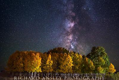 Starry Aspens-Boulder Mountain, Utah