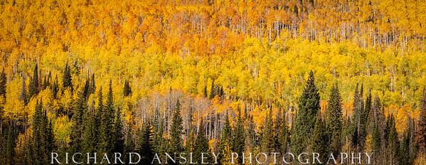Uinta Colors-Uinta National Forest, Utah