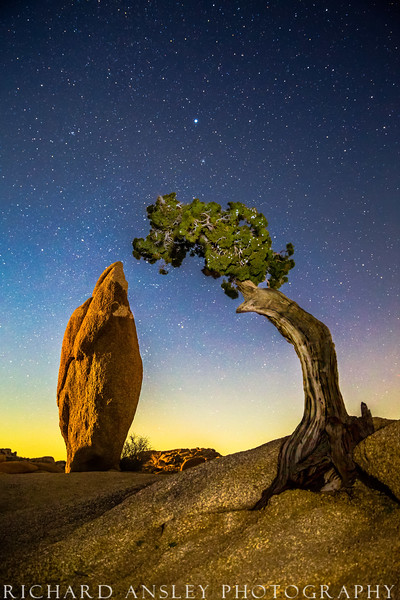 Stone and Tree-California