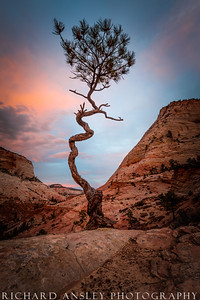 Crooked Pine-Zion NP, Utah