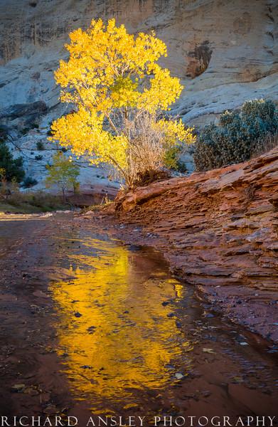 Gold On Pleasant Creek-Capitol Reef NP, Utah