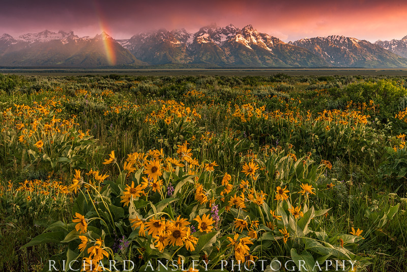 Teton Rainbow Wildflowers