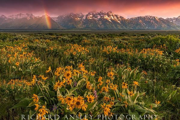Teton Rainbow Wildflowers