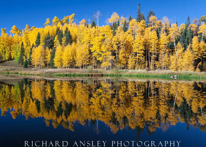 On Golden Pond-Cimarron Mountains, Colorado