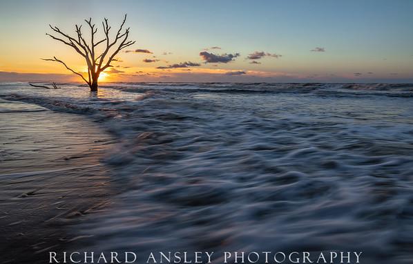 Driftwood Beach Sunrise,-Edisto Island, SC