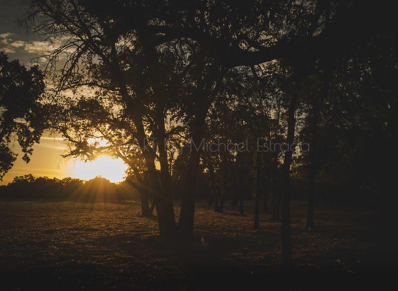 The Woods Await