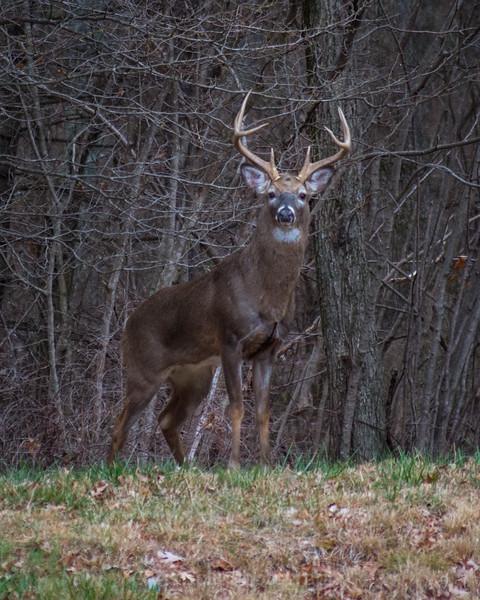 deer buck 2 2020 (1 of 1)