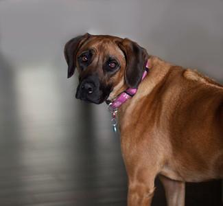 Billie (Holiday) Sweet Family Dog