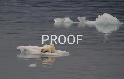 arctic 2005-8