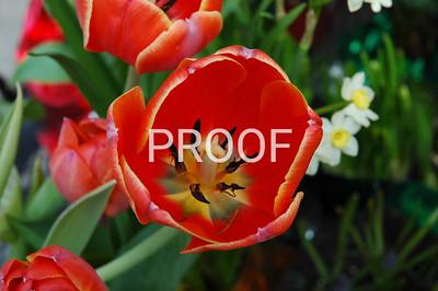 canada flower