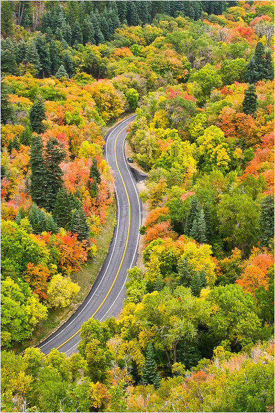This is my out-of-state photo for fall. It's up a canyon outside of Salt Lake City. I got to admit, some of Utah's fall colors really rival those of Colorado!