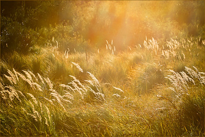 This is SO grassland/foothills ecosystem in the fall. I love the grasses...