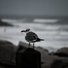 Lone Seabird
