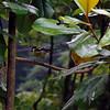 Bird 2 at Wolong China DSC_0009-A