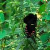 Wolong China Butterfly DSC_0203