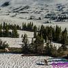 NE-Animals_7203_ATO.WestUSACanada2014-USA.MT.GlacierNP.LoganPassArea.HiddenLakeNatureTrail.MountainGoatFamily-B (DSC_7203.NEF)