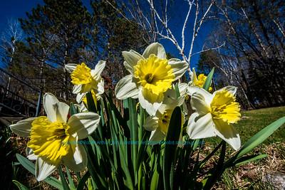 Obst FAV Photos 2015 Nikon D800 Nature Enchanting Flowers Image 7654)