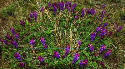 Obst FAV Photos Nikon D800 Nature Enchanting Flowers Image 8780