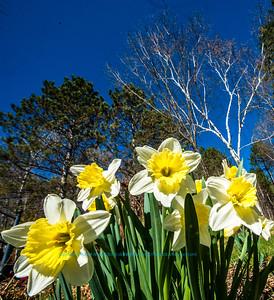 Obst FAV Photos 2015 Nikon D800 Nature Enchanting Flowers Image 7656